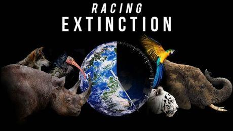 racing-extinction-diffuse-le-2-decembre-sur-discovery_72297_w460